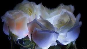 Hechizo con cinco rosas blancas para enamorar