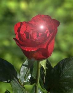 Té de rosas con conjuro