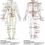 Lineas de la acupuntura