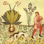Plantas mágicas: antiguo dibujo sobre la mandrágora