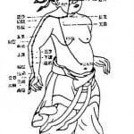 Puntos de comando de la acupuntura