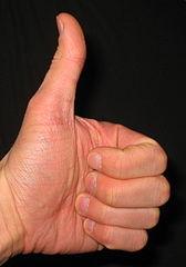 El pulgar en la lectura de la mano