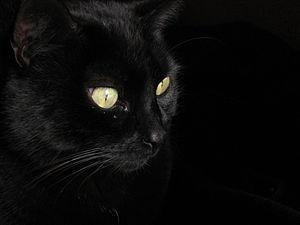 La brujería y los animales