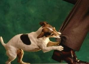 clinica_veterinaria_diaz_del_olmo_perro