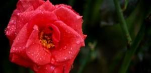 Tres rituales místicos para el amor