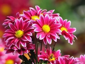 flores02