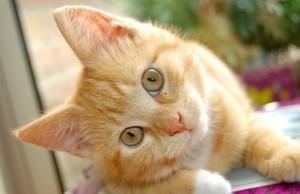 gatos-melhores-artigos-1-620x400