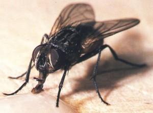 moscadomest