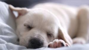 significado-de-soñar-con-perros-600x337