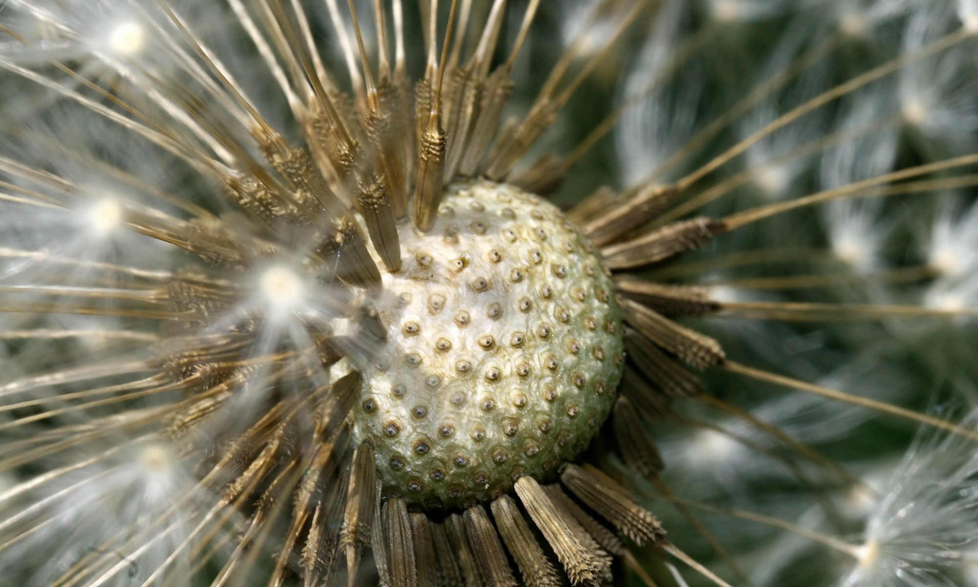 Mundo vegetal y esoterismo