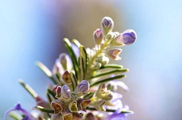 2 hechizos de amor con plantas