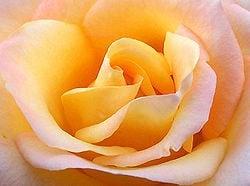 El lenguaje de los colores de las flores en magia y brujería