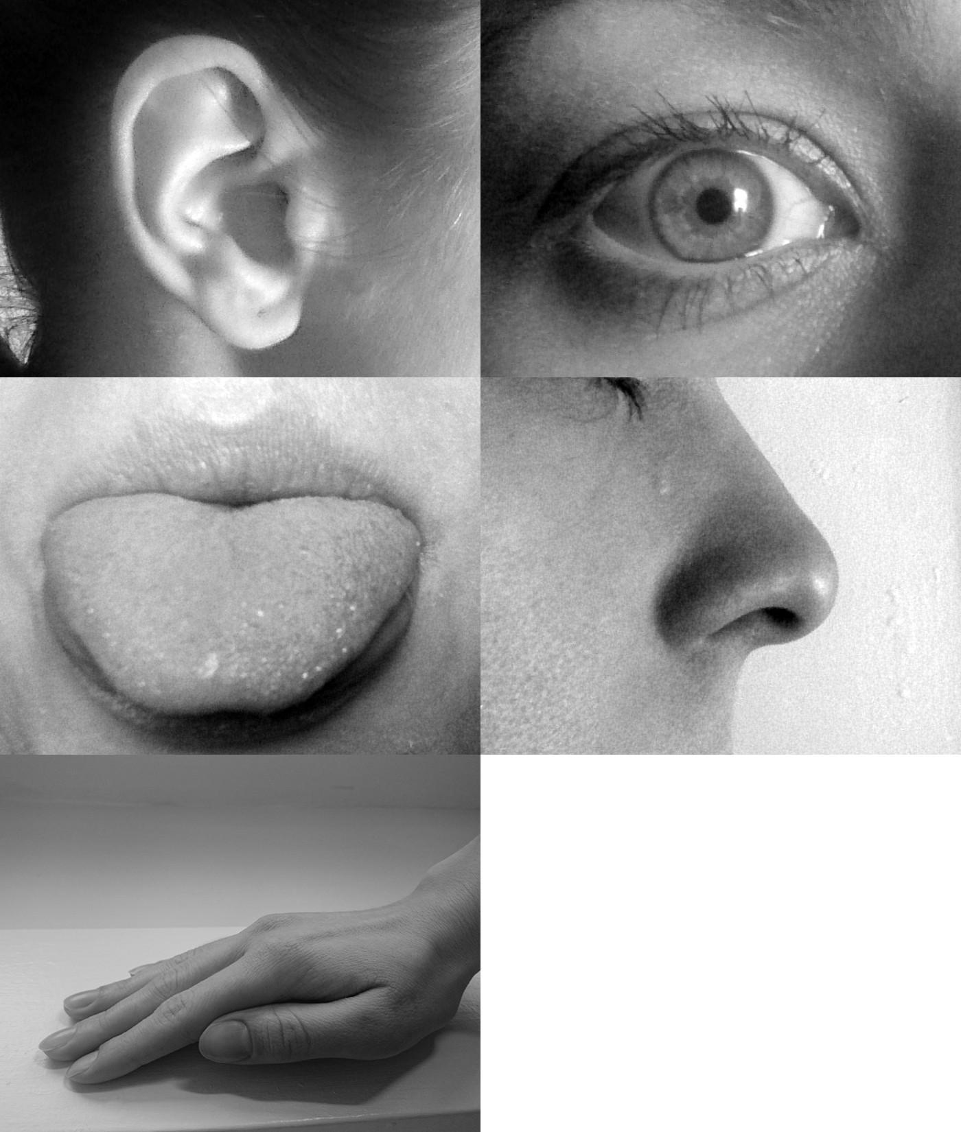 Los 5 sentidos y la brujería