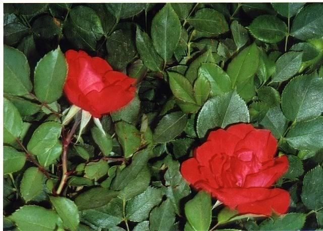 Hechizo contra le envidia realizado con flores