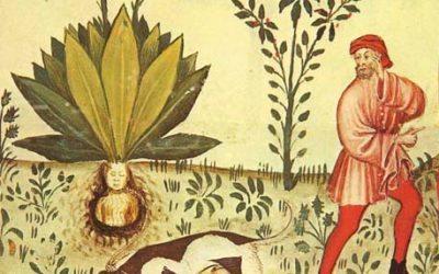 5 plantas mágicas muy potentes