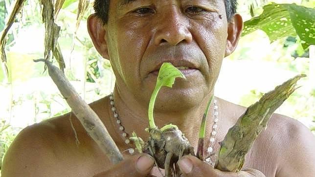 ayahuasca-644x362